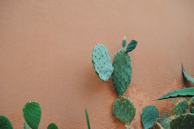 cacti exhibit